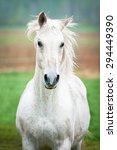 Stock photo portrait of beautiful white running horse 294449390