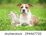 Stock photo little kitten playing with american staffordshire terrier dog 294467720