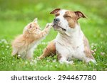 Stock photo american staffordshire terrier dog playing with little kitten 294467780