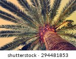 Palm Tree In Soft Light Of...