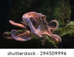 common octopus  octopus... | Shutterstock . vector #294509996