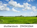 green rice field in agriculture ...   Shutterstock . vector #294541064