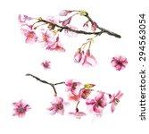 Watercolor Cherry Blossom. Han...