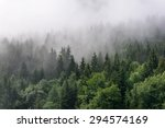 evergreen forest overview  ... | Shutterstock . vector #294574169