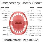 temporary teeth   names  groups ... | Shutterstock .eps vector #294583064