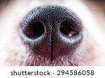 Macro Shot Of Dog Nose  Dog Nose