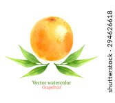 watercolor vector grapefruit | Shutterstock .eps vector #294626618