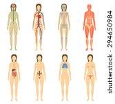 Постер, плакат: Set of human organs