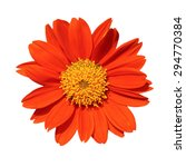 Orange Flower  Isolated On...