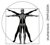 vitruvian human or man as a...   Shutterstock . vector #294916034