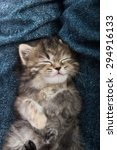 Stock photo close up of cute tabby kitten sleeping on blue jeans background 294916133