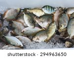 Various Fishes Caught In...