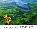 Tea Plantation Valley With Fog...