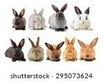 Stock photo rabbits isolated on white background 295073624