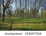 old trees in the abandoned park | Shutterstock . vector #295097534