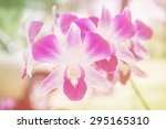 sweet color orchid in soft