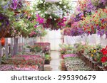 Greenhouse Full Of Colorful...