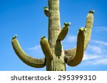 Cactus Up Close At Saguaro...