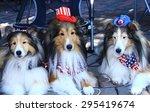 three sheltie dogs dressed in...   Shutterstock . vector #295419674