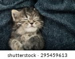 Stock photo close up of cute tabby kitten sleeping on blue jeans background vintage filter 295459613