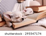 Stock photo adorable chihuahua dogs with books on sofa 295547174