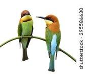 beautiful birds chestnut headed ...   Shutterstock . vector #295586630