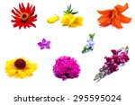 A Set Of Wild Flowers On A...