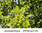 green leaves in sunlight | Shutterstock . vector #295616714