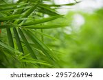green nature with copy space... | Shutterstock . vector #295726994