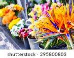 Strelitzia Reginae Flowers...