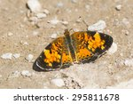 Small photo of Northern Crescent Butterfly alit on a muddy path.