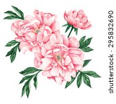 pale pink peony. watercolor ... | Shutterstock .eps vector #295832690
