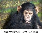 Baby Monkeys Cute