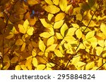 Autumn Yellow Leaves Backgroun...