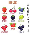 juicy delicious cranberry ... | Shutterstock .eps vector #295907996