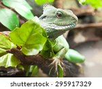 close up view of a chinese... | Shutterstock . vector #295917329