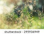 green grass in the field with... | Shutterstock . vector #295936949