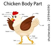 illustration of chicken body... | Shutterstock .eps vector #295944590