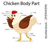illustration of chicken body...   Shutterstock .eps vector #295944590