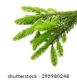 pine tree branch isolated on... | Shutterstock . vector #295980248