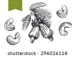 cashew set of vector sketches... | Shutterstock .eps vector #296026118