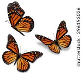 Stock photo three monarch butterfly isolated on white background 296193026