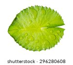 Green Leaf Water Lily And Wate...
