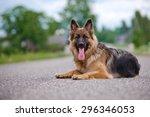 German Shepherd Dog Lying Down...