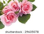 four home grown petite pink... | Shutterstock . vector #29635078