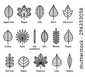 leaves types with names icons... | Shutterstock .eps vector #296353058