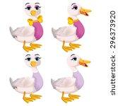 Female Ducks