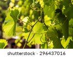 grapevine  ukraine