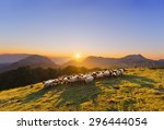 Flock Of Sheep In Saibi...