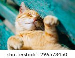 Stock photo red kitten cat sleeps on a bench in park in hot summer day 296573450